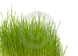 New Green Grass Stock Images - Image: 17823874