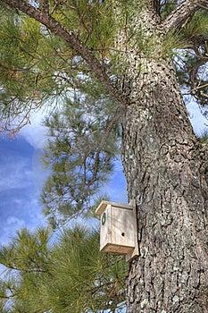 Birdhouse In Pine Tree Stock Photo - Image: 17839040