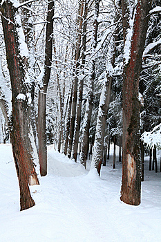 Winter Alley Stock Photography - Image: 17844532