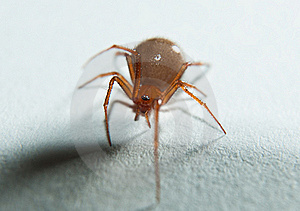 Spider Royalty Free Stock Photo - Image: 17845355