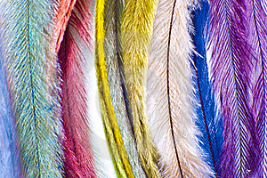 Feather Stock Photos - Image: 17846213