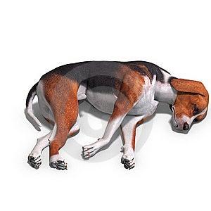 Austrian Black Dog Stock Photos - Image: 17847483
