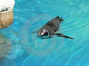 Penguin Royalty Free Stock Photos - Image: 17849938