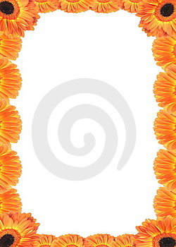 Frame Of Gerber Flowers. Stock Photography - Image: 17851632