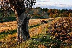 Ukrainian Countryside Landscape Royalty Free Stock Photo - Image: 17866895