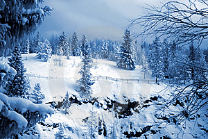 Winter Forest Stock Images - Image: 17872704