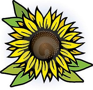 Sunflower Royalty Free Stock Image - Image: 17872726