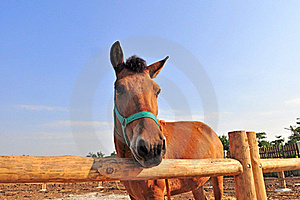 Small Horse In Farm Stock Photo - Image: 17874690