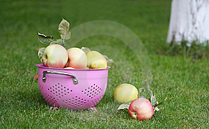 Under The Tree Royalty Free Stock Images - Image: 17897679