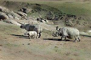 Famille De Rhinocéros Image libre de droits - Image: 1792206