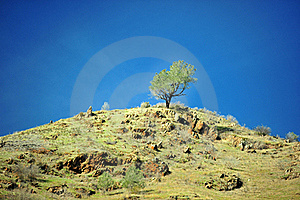Lonely Tree Stock Image - Image: 17901261