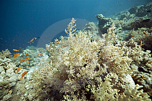 Tropical Underwater Life In The Red Sea. Stock Photo - Image: 17912680