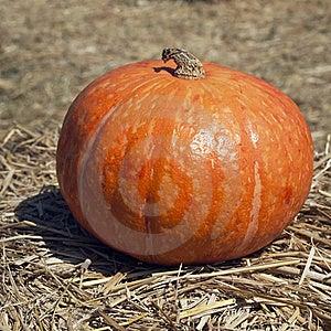 The Orange Pumpkin Stock Photo - Image: 17916880