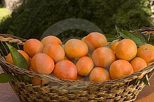 Tangerines Stock Image - Image: 17917481