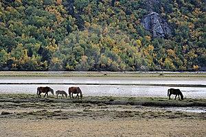 Horses Browsing Near  Mountain Lake Stock Photo - Image: 17920990