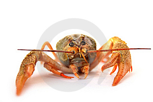 Lobste Stock Photography - Image: 17922372