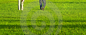 Grass-field Stock Photography - Image: 17949682
