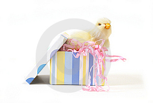 Chick In A Gift Box Stock Image - Image: 17957181