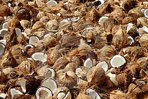 Coconuts Royalty Free Stock Photography - Image: 17968357