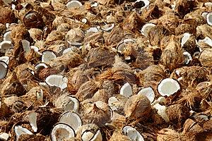 кокосы Стоковая Фотография RF - изображение: 17968357