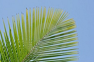 Palm Leaves Royalty Free Stock Photography - Image: 17969617