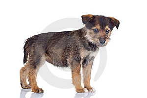 Very Curious Puppy Royalty Free Stock Photo - Image: 17970565