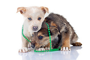 Two Very Shy Puppies Stock Photos - Image: 17970623