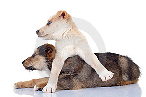 Cute Stray Puppies Looking To A Side Stock Images - Image: 17970634