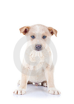 Seated Homeless Puppy Royalty Free Stock Images - Image: 17970649