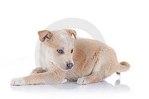 Stray Puppy Sitting Stock Image - Image: 17970651