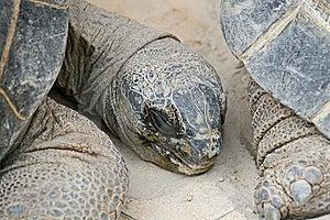 Turtle Head Stock Photography - Image: 17988862