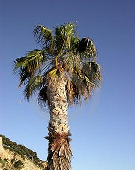 Kokosnöt-tree Royaltyfri Fotografi