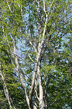 Tree In The Forest Stock Photos