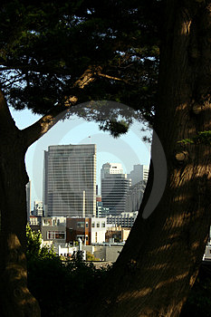 San Francisco City From Park Stock Photo