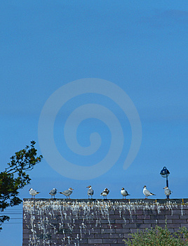 Gull Club Royalty Free Stock Images - Image: 186539