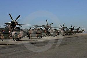 Caudas do helicóptero do Oryx Imagem de Stock