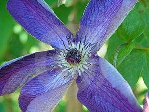 Violet flower Stock Photos