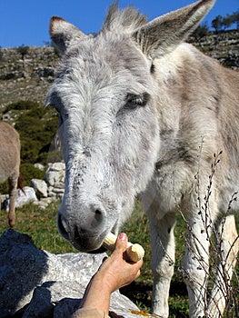 Donkey 1 Free Stock Images