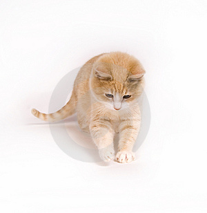 Yellow kitten on white background Stock Photo