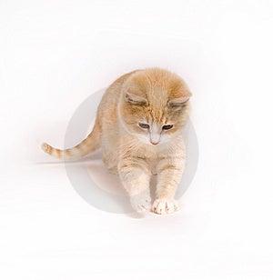 Gattino giallo su fondo bianco Fotografia Stock