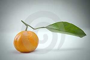 Tangerine Royalty Free Stock Images - Image: 18008239