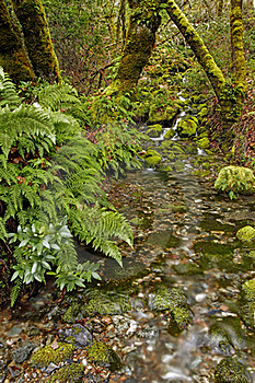 (Lower) Merlin Falls Ferns Stock Photography - Image: 18014032