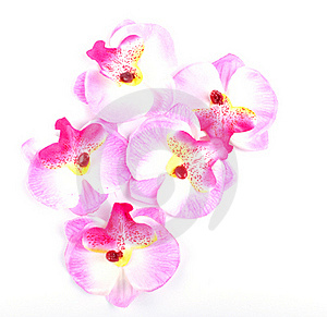 Pink Orchid Royalty Free Stock Images - Image: 18022839