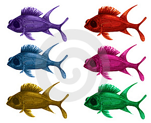 Squirrel Fish Royalty Free Stock Images - Image: 18039869