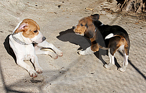 Two Dogs Playing Stock Photography - Image: 18047372
