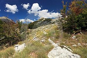Wild Beauty Stock Images - Image: 18048794