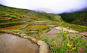 Rice Terraces Stock Photo - Image: 18074700