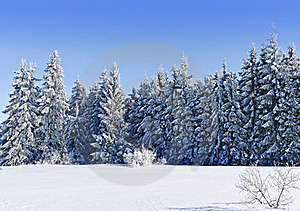 Sunny Winter Day Royalty Free Stock Photography - Image: 18086777