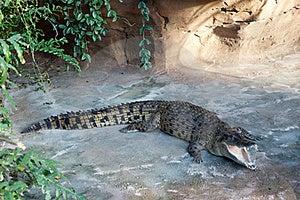 Crocodile Royalty Free Stock Images - Image: 18087259