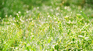 Morning dew in grass Free Stock Photos